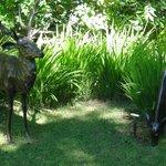 Deer in the front garden