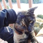 resident kitteh