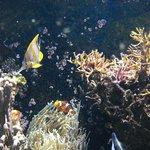 Where is Nemo