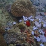 beauty of the sea (spot the lionfish)