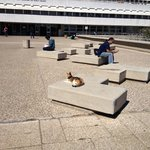 Students share the campus with... Cats :)