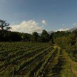 Boekenhoutskloof vines