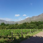 View across the Boekenhoutskloof vines to the Hottentots-Holland Mountain