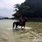 Horse: Bonita