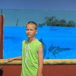 за стеклом дельфины