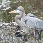 birds in Loxahatchee