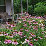 The porch, with coneflowers