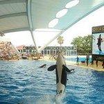 orca rise