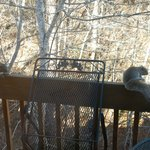 Look past the Squirrels on the deck railing!