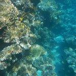 риф Hilton Sharks Bay Resort 4*