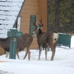 Right outside our door at the Douglas Fir Resort and Chalets!