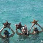 snorkeling among the star fish