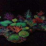 Coral under blue light