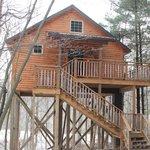 Wild Cherry Tree House