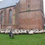 A herd of sheep surrounding the church