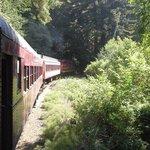 Skunk Train view