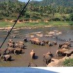 Elephant ophanage