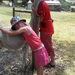 The affectionate Alpaca