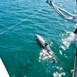 Dolphin encounter on Trisail Charters