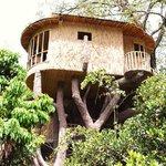 Tree house at the den corbett