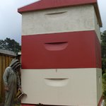 New Zealand's biggest beehive