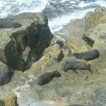 Seals at Shag Rock