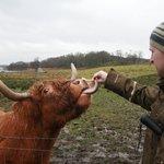 feeding the hairy coo's