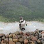 Mr.Pinguino