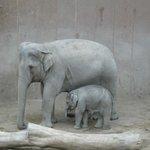 Elefantessa con Elefantino