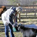 Feeding the rescue animals