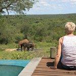 Les éléphants vus de la piscine