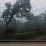 The window screen is visible in this view of the misty rain on the morning we left the cottage.