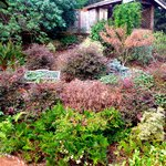 The winder cottage garden is still colorful and interesting.