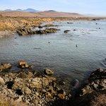 Piedras Blancas Rookery: An Elephant Seal Preserve. Taken by XplorMor