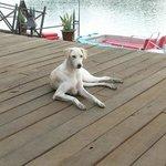Foto de Mandina River Lodge