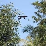 Mono saltando entre los arboles