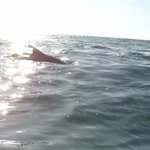 Playing with the dolphins!