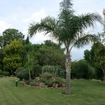 ARGENTINIAN QUEEN PALM