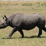 Black Rhino!