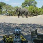Elefanten laufen hier direkt durchs Camp