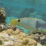 Les poissons du lagon a 40 m de la plage.