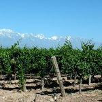 Mendel Winery's Vineyards