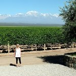 Pulenta Winery's Vineyards with an Andes view.