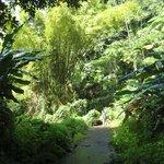 Hiking nearby in El Yunque
