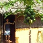 L'albero di Papaja a lado della Pepita (ed Erika, la proprietaria)
