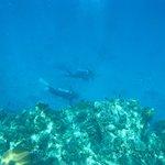 excellent dives