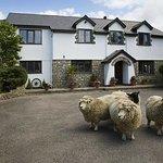 sheepleys