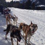 Excursión en trineo con perros
