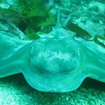 Face to face with an eagle ray