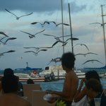 Muitas gaivotas na praia